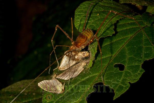 Biodiversity Group, _MG_0438