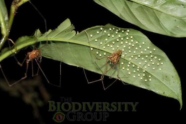 Biodiversity Group, _DSC5218