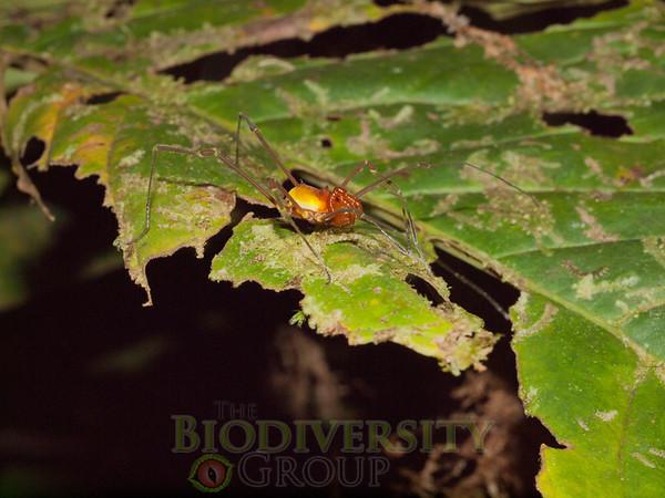 Biodiversity Group, P1013269