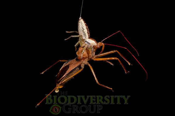 Biodiversity Group, _DSC7917
