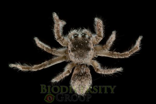 Biodiversity Group, IMGP6112