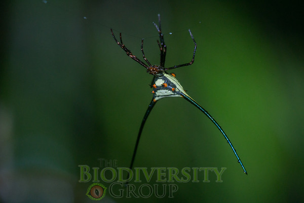 Biodiversity Group, _DSC4606