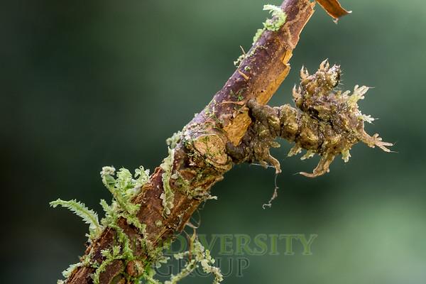 Biodiversity Group, _DSC5382