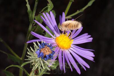 Biodiversity Group, DSC04217