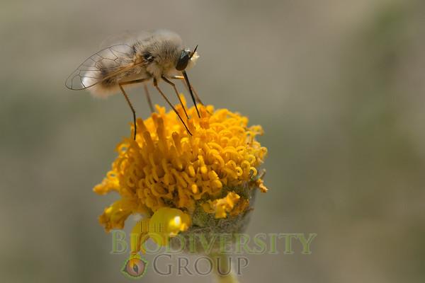 Biodiversity Group, _DSC2942