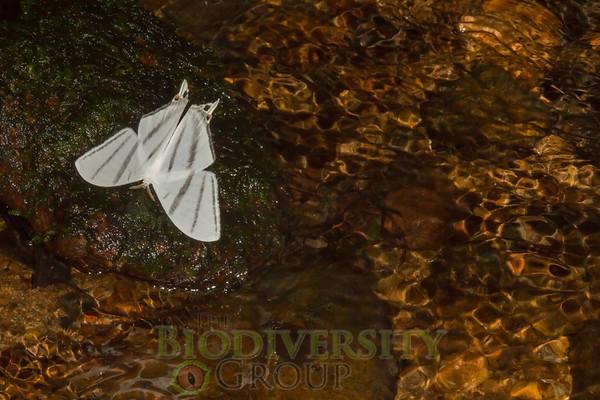 Biodiversity Group, _MG_0678