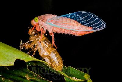 Biodiversity Group, DSC01833