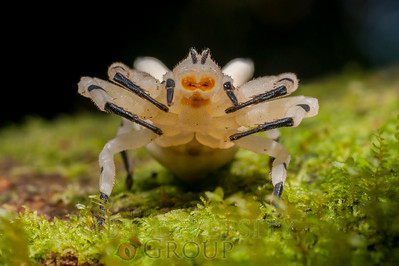 Biodiversity Group, _DSC9465