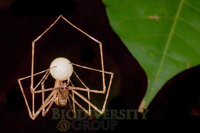 Biodiversity Group, _DSC8968