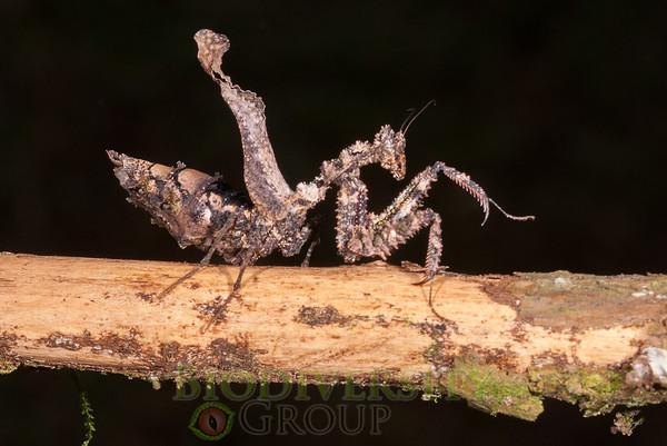 Biodiversity Group, _DSC9685