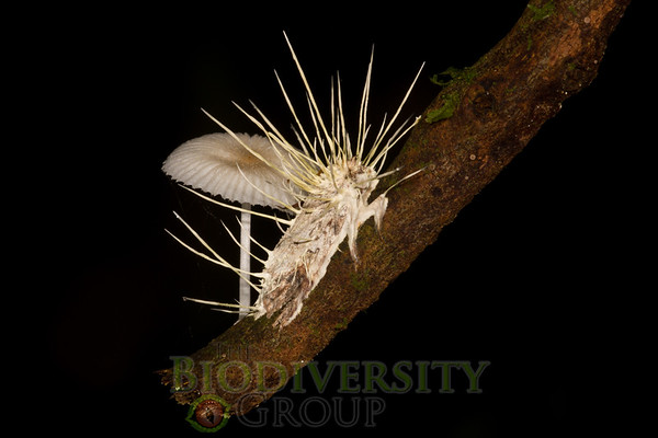 Biodiversity Group, _MG_8249