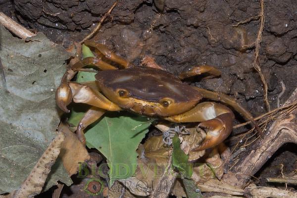 Biodiversity Group, IMGP0125