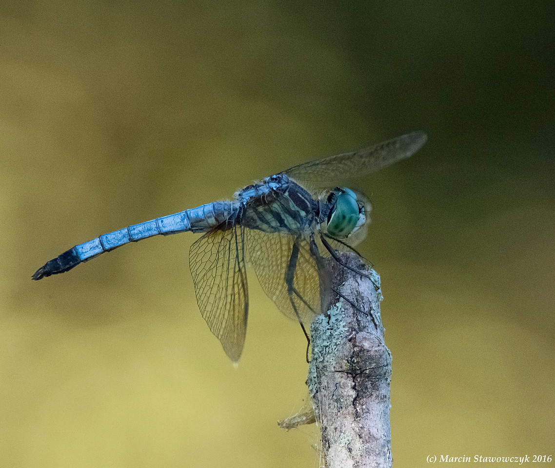 Dragonfly in the shadow