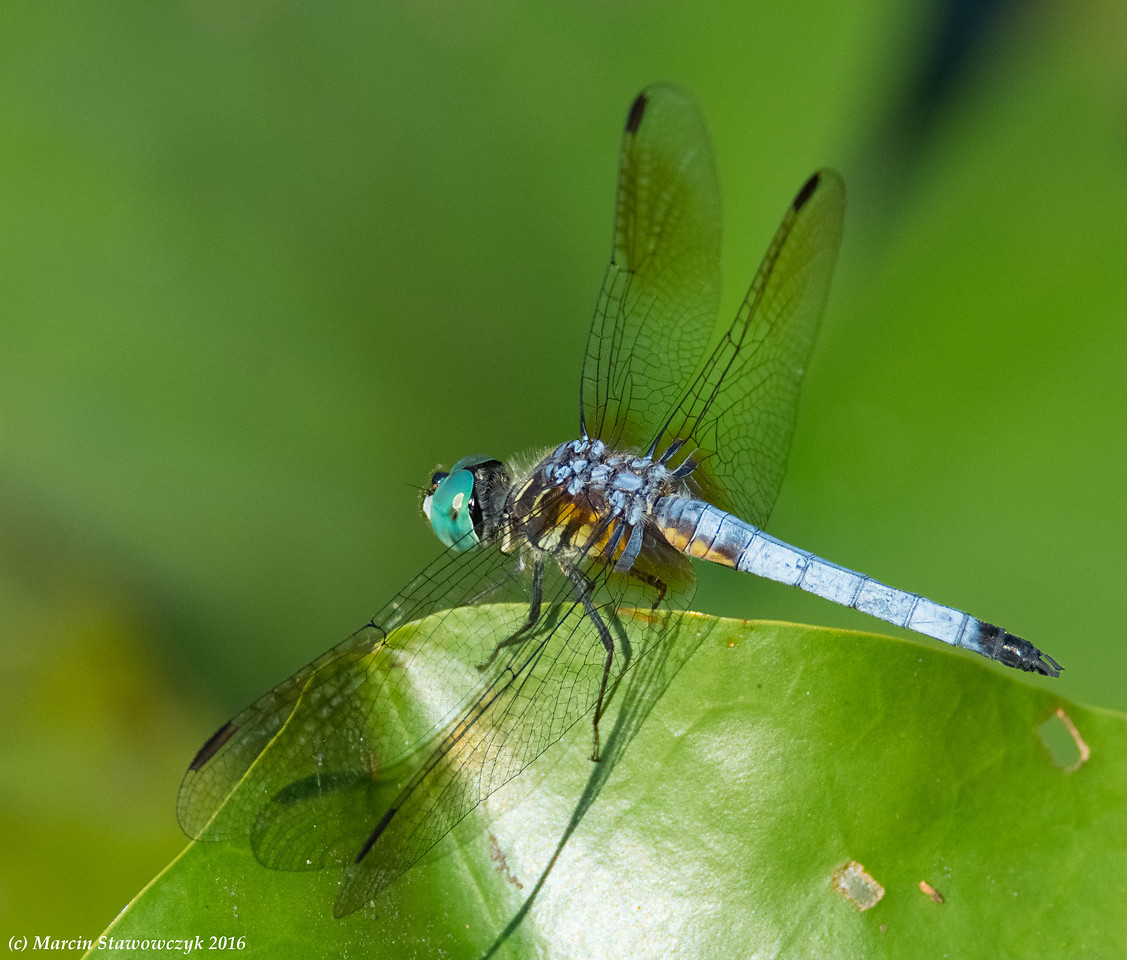 Dragonfly at the edge