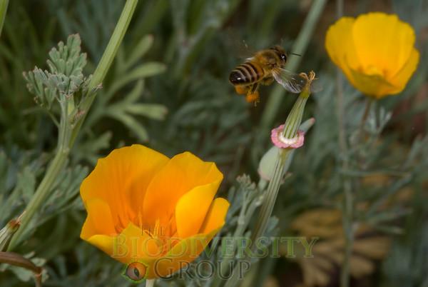 Biodiversity Group, _DSC6656