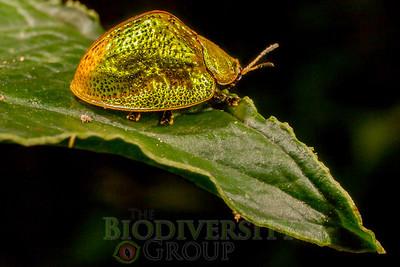 Biodiversity Group, _MG_0290