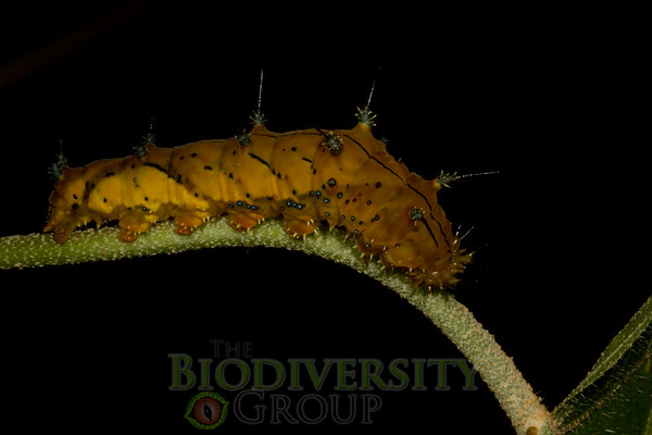 Biodiversity Group, _MG_0726
