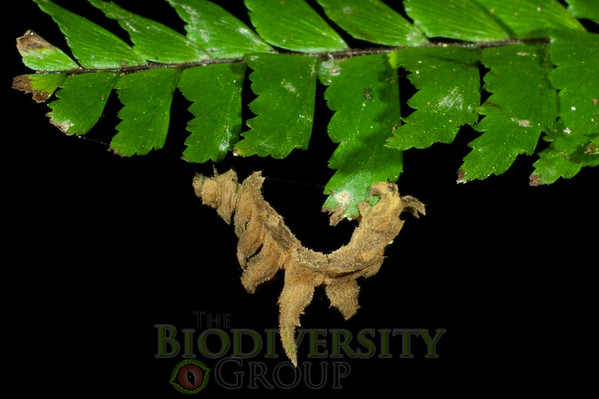 Biodiversity Group, _DSC6709