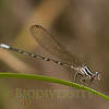 Biodiversity Group, _DSC8947