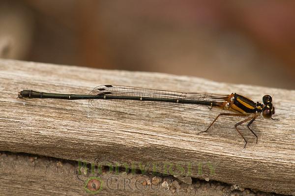 Biodiversity Group, PICT1437