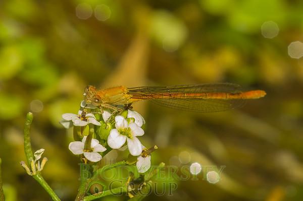 Biodiversity Group, PICT3786
