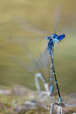 Biodiversity Group, _DSC9799