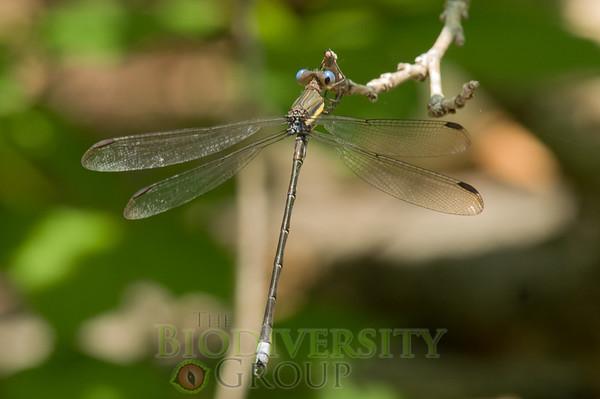 Biodiversity Group, PICT4168