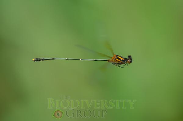 Biodiversity Group, PICT1462