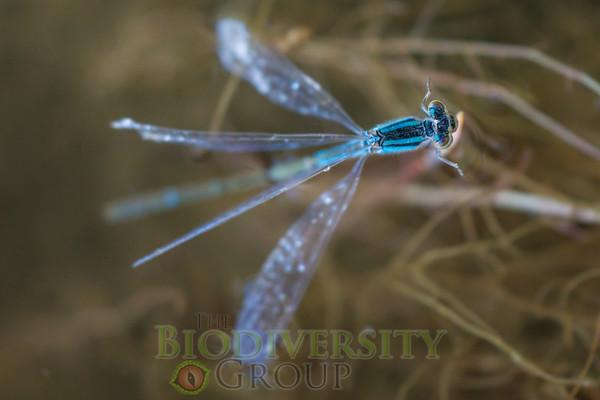 Biodiversity Group, _DSC9816