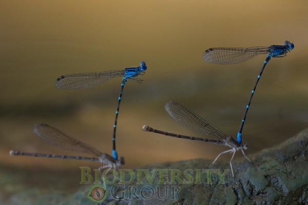 Biodiversity Group, _DSC9805