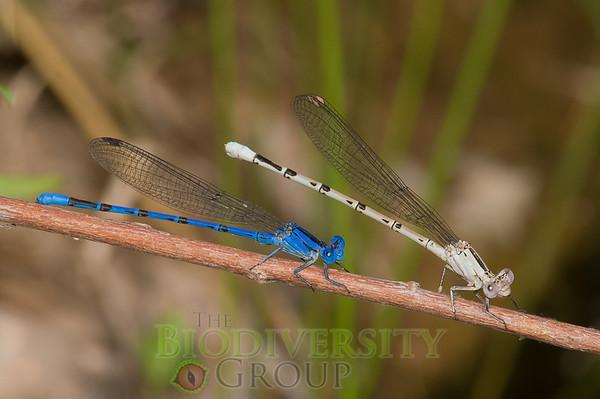 Biodiversity Group, PICT4823