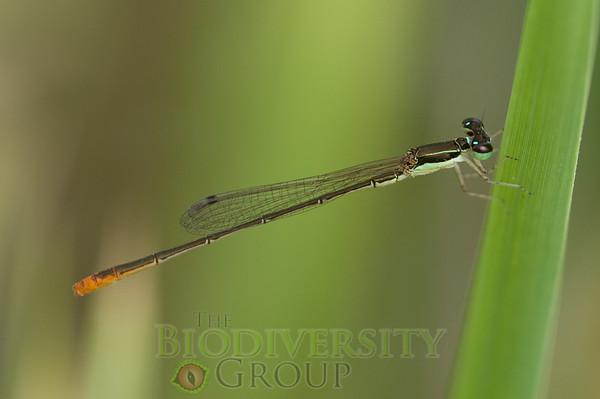 Biodiversity Group, PICT1416