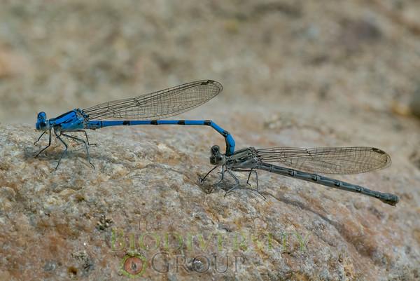 Biodiversity Group, Black Canyon City-0119