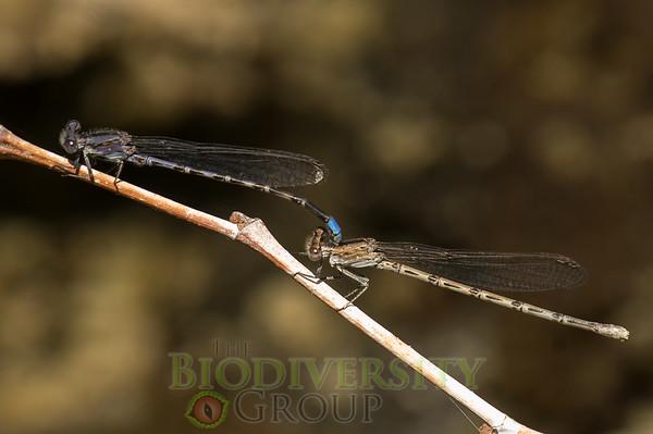 Biodiversity Group, PICT4158