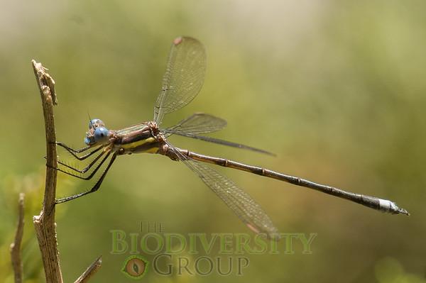 Biodiversity Group, PICT4173