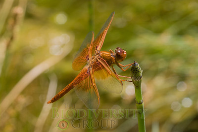 Biodiversity Group, _DSC6385