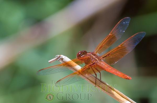 Biodiversity Group, Bahia Kino-0126