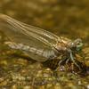 Biodiversity Group, PICT4260