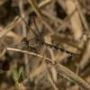 Biodiversity Group, _DSC8939