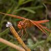 Biodiversity Group, _DSC6746