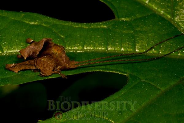 Biodiversity Group, _MG_1344