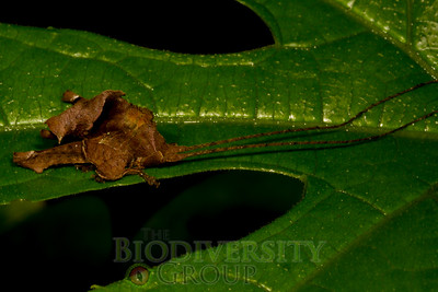 Biodiversity Group, _MG_1344