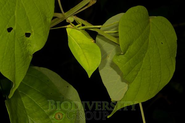 Biodiversity Group, _MG_0723