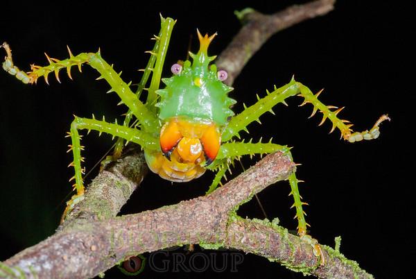 Biodiversity Group, _DSC8898