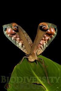 Biodiversity Group, IMGP5187