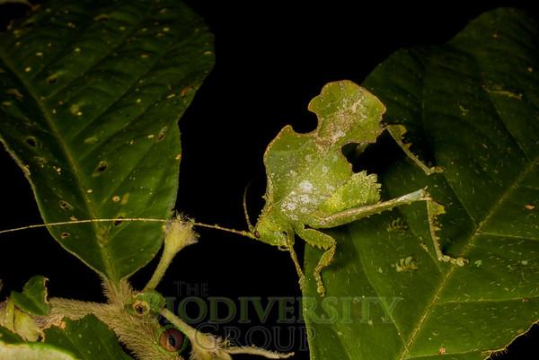 Biodiversity Group, IMGP5388