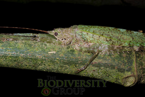 Biodiversity Group, IMGP4886