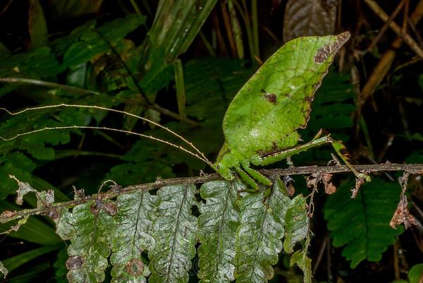 Biodiversity Group, IMGP7832
