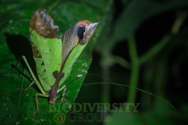 Biodiversity Group, _DSC4424