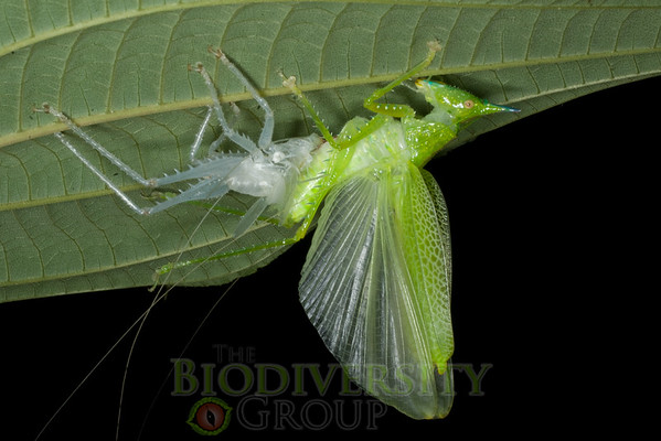 Biodiversity Group, IMGP5393